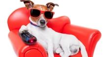 dog remote control